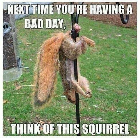 Squirrel - NEXT TIME YOU'RE HAVING A BAD DAY, THINK OF THIS SQUIRREL