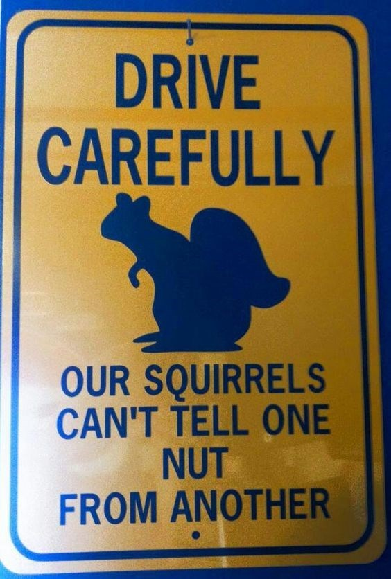 Signage - DRIVE CAREFULLY OUR SQUIRRELS CAN'T TELL ONE NUT FROM ANOTHER