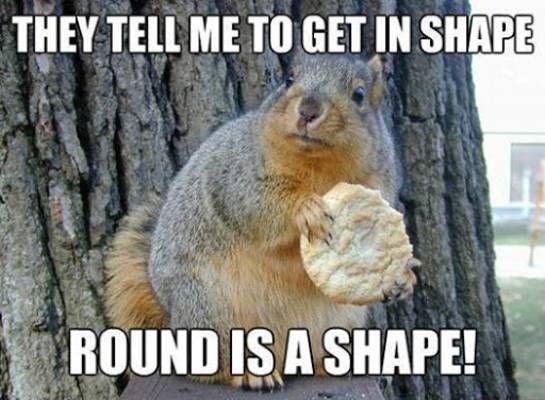 Squirrel - THEY TELL ME TO GET IN SHAPE ROUND IS A SHAPE!