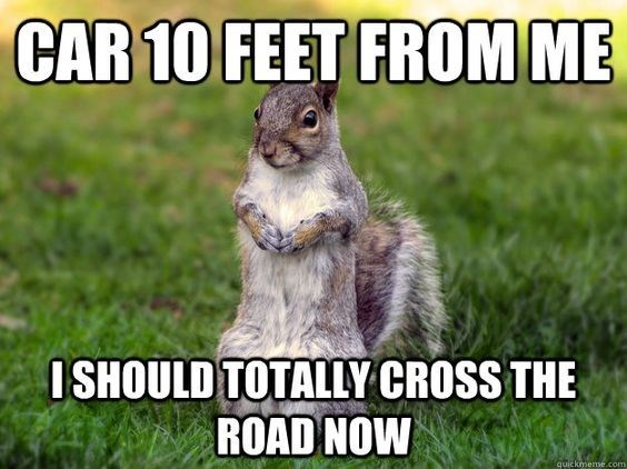 Squirrel - CAR 10 FEET FROM ME ISHOULD TOTALLY CROSS THE ROAD NOW quickmeme.com
