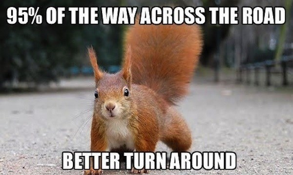 Squirrel - 95% OF THE WAY ACROSS THE ROAD BETTER TURNAROUND