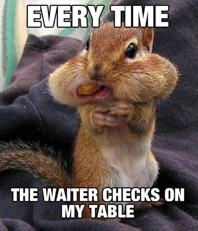 Squirrel - EVERY TIME THE WAITER CHECKS ON MY TABLE