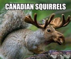 Wildlife - CANADIAN SQUIRRELS