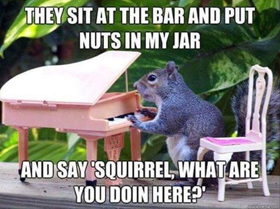 Squirrel - THEY SIT AT THE BAR AND PUT NUTS IN MY JAR AND SAY SOUIRREL WHAT ARE YOUDOIN HERE?