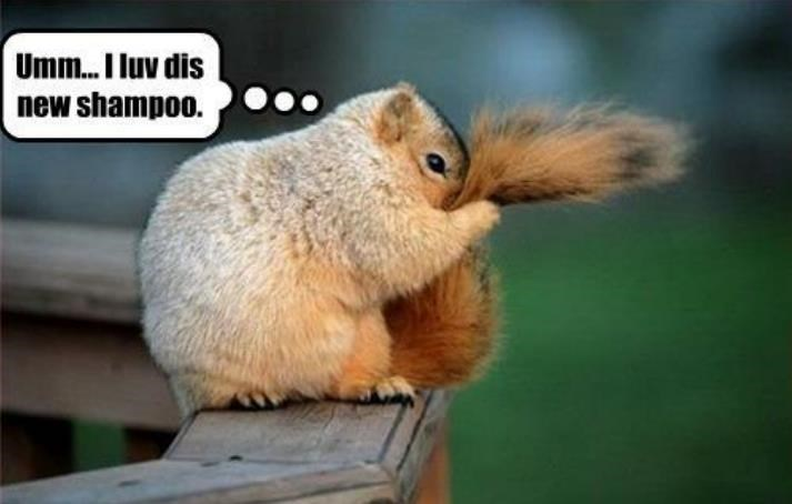 Squirrel - Umm... luv dis new shampoo.