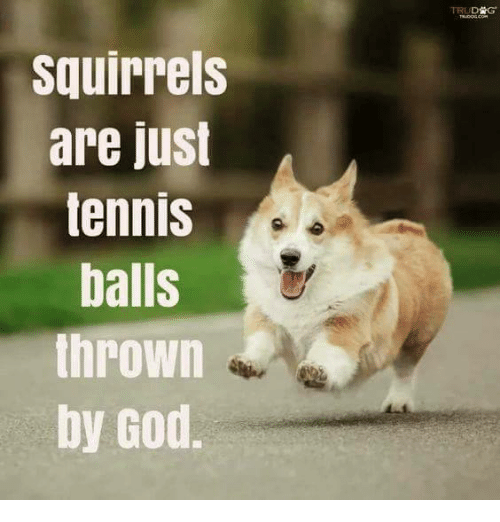 Dog - TRUDSG THUCOG COe squirrels are just tennis balls thrown by God.