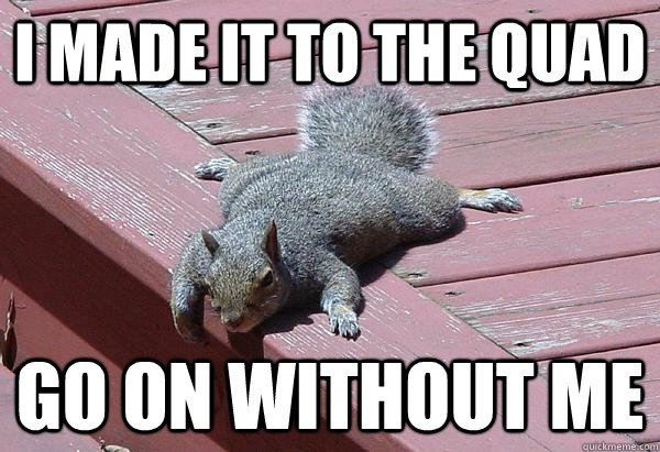 Squirrel - IMADE IT TO THEQUAD GO ON WITHOUT ME auickmeme.cpm