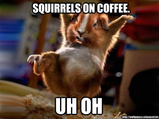 Photo caption - SQUIRRELS ON COFFEE. UH OH http://wallpapetsotorad