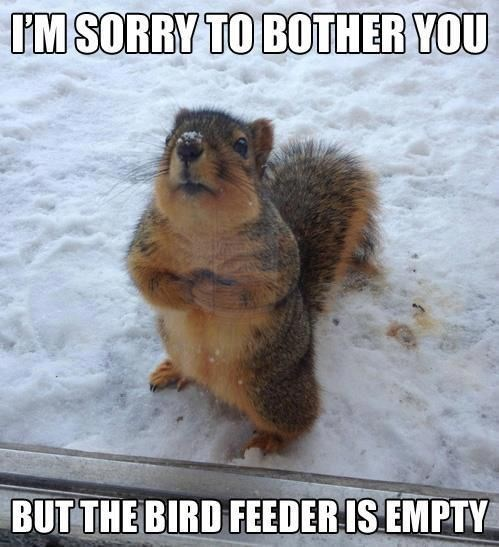 Squirrel - IM SORRY TO BOTHER YOU BUT THE BIRD FEEDERIS EMPTY