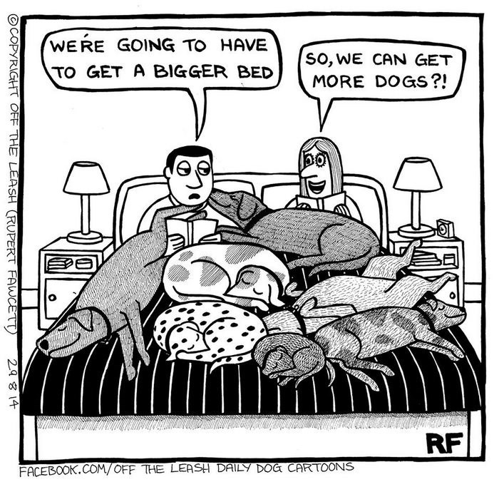 webcomic - Cartoon - WERE GOING TO HAVE SO, WE CAN GET TO GET A BIGGER BED MORE DOGS?! RF FACEBOOK.COM/OFF THE LEASH DAILY DOG CARTOONS OCOPYRIGHT OFF THE LEASH RUPERT FAWCETT) 29 8 14