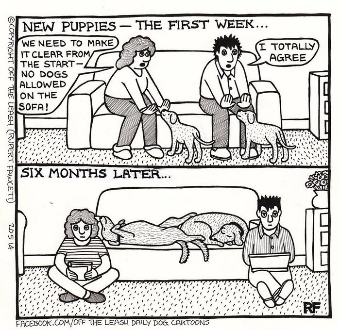 webcomic - Cartoon - NEW PUPPIES THE FIRST WEEK... WE NEED TO MAKE IT CLEAR FROM THE START NO DOGS ALLOWED (I TOTALLY AGREE ON THE SOFA! SIX MONTHS LATER... RE FACEBOOK.COM/OFF THE LEASH DAILY DOG CARTOONS OCOPYRIGHT OFF THE LEASH RUPERT FAWCETT