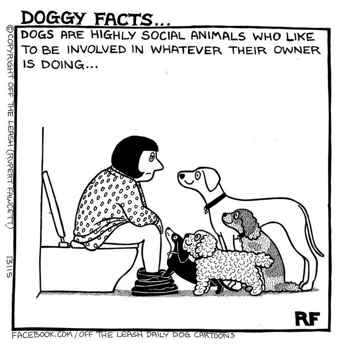 webcomic - Cartoon - DOGGY FACTS... DOGS ARE HIGHLY SOCIAL ANIMALS WHO LIKE TO BE INVOLVED IN WHATEVER THEIR OWNER IS DOING... RF FACEBOOK.COM/OFF THE LEASH DAILY DOG CARTOONS OCOPYRIGHT OFF THE LEASH (RUPERT FAWCETT 13115