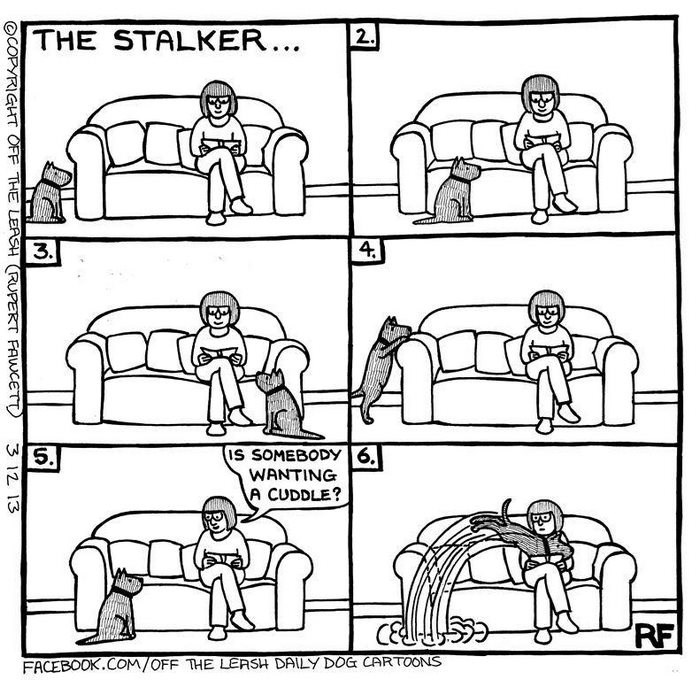webcomic - Text - THE STALKER... 2. 3. 4. IS SOMEBODY 6. WANTING A CUDDLE? 5. RF FACEBOOK.COM/OFF THE LEASH DAILY DOG CARTOONS OCOPYRIGHT OFF THE LEASH (RUPERT FAWCETT 3 12 13