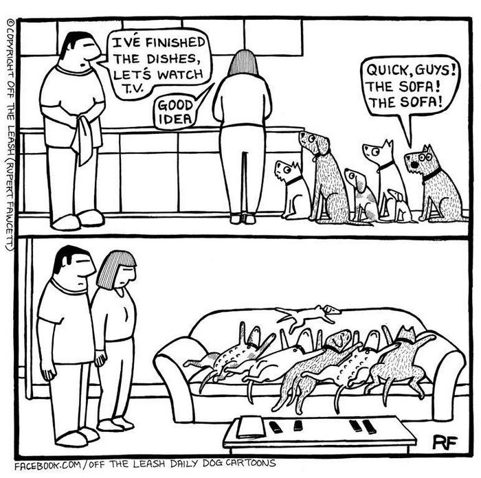 webcomic - Text - IVE FINISHED THE DISHES, LETS WATCH T.V GOOD IDEA QUICK, GUYS! THE SOFA! THE SOFA! RF FACEBOOK.COM/OFF THE LEASH DAILY DOG CARTOONS OCOPYRIGHT OFF THE LEASH (RUPERT AWCETT