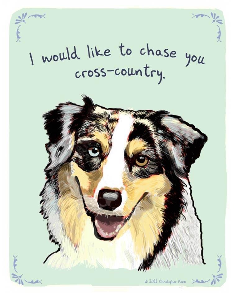 Dog - would like to chase you cross-coluntry. 2011 Christepher Raz