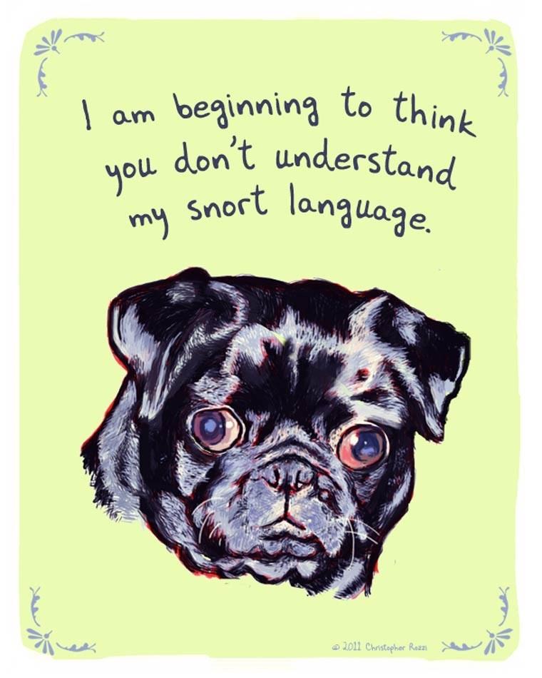 Dog - beginning to think am don't understand you Snort language. my 2011 Christapher Rezzi