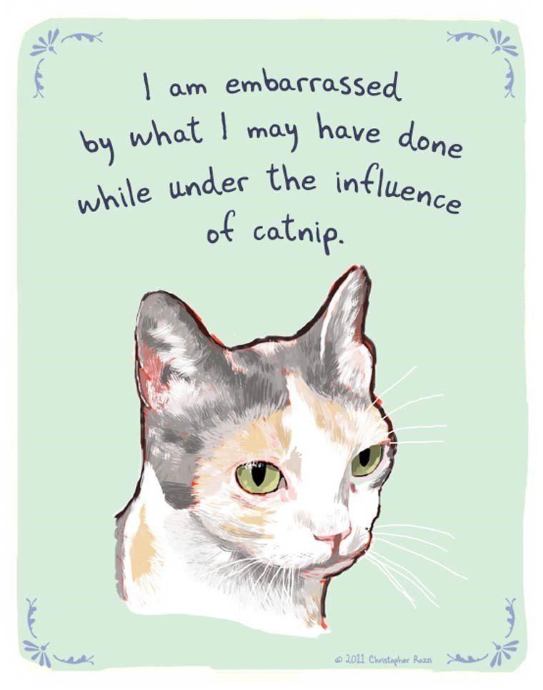 Cat - embarrassed have done am may by what while under the intluence of catnip. 2011 Christapher Razz