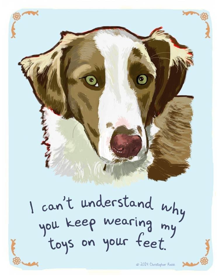 Dog - can't understand why you keep wearing my feet. your toys On 2014 Christepher Razzn