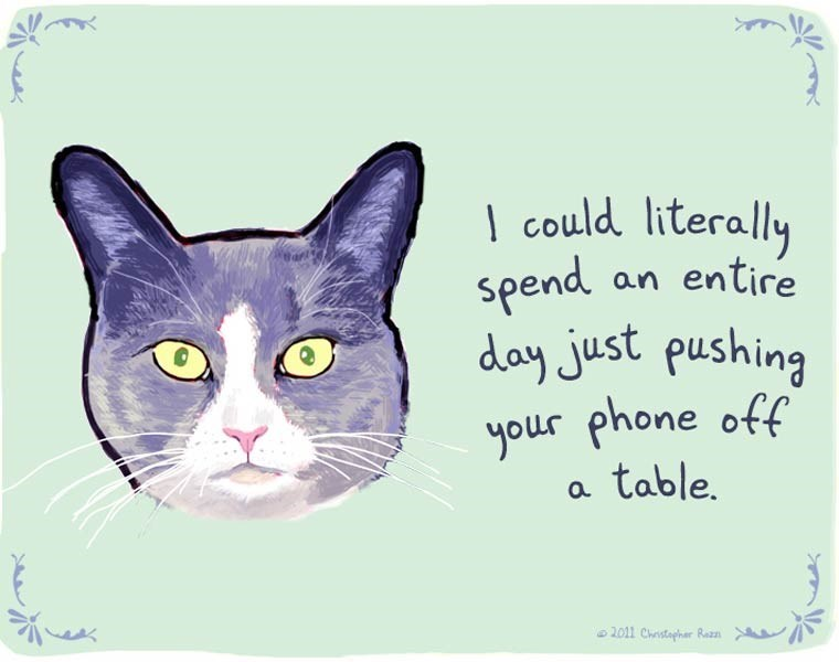 Cat - could literally entire spend day just pushing your phone off an table. 2011 Chstapher Rezn