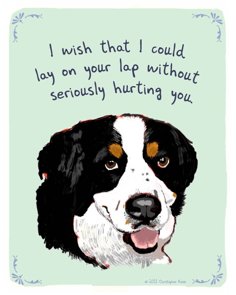 Dog - wish that could your lap without lay On seriously hurting you 2011 Christapher Rezz