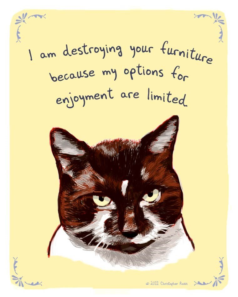 Cat - am destroying your turniture for because my options enjoyment are limited 2011 Christapher Razzı