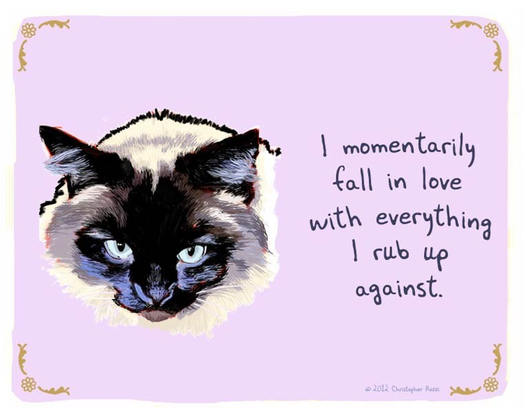 Cat - momentarily fall in love with everything rub up against. 2012 Chrstepher Rez