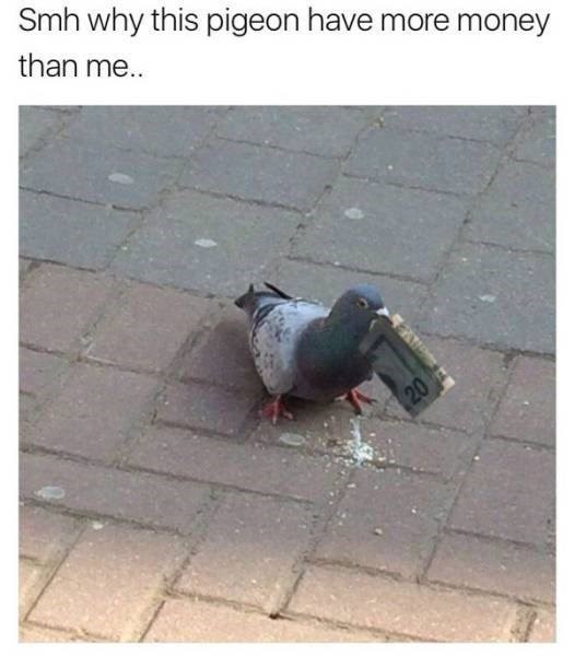 Pigeons and doves - Smh why this pigeon have more money than me.. 20