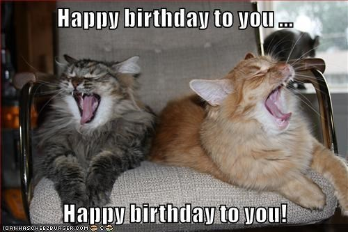Cat - Happy birthday to you Haupy birthday to you! ICANHASCHEE2EURGER cOM