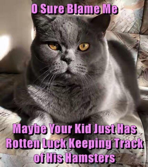 Cat - O Sure Blame Me Maybe Your Kid JustHas Rotten Luck Keeping Track of His Hamsters