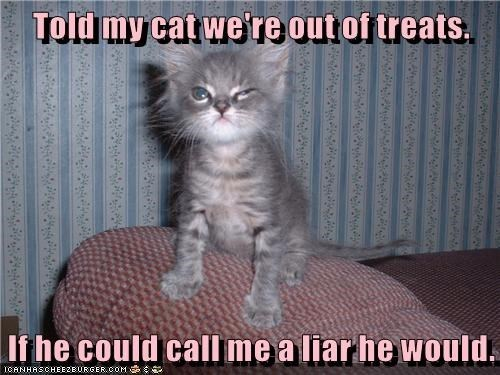 Cat - Told my cat we're out of treats. If he could callme a liar he would. ICANHASCHEE2EURGER COM h