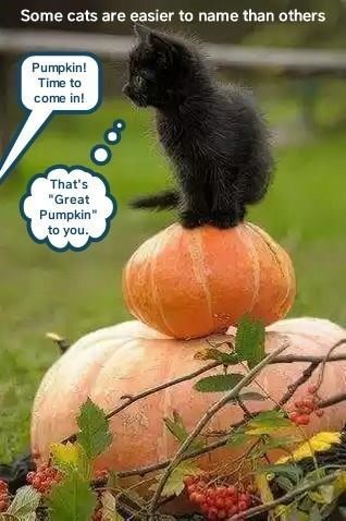 "Pumpkin - Some cats are easier to name than others Pumpkin! Time to come in! That's ""Great Pumpkin to you."