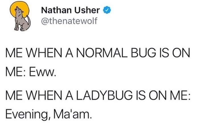 Text - Nathan Usher @thenatewolf ME WHEN A NORMAL BUG IS ON ME: Eww. ME WHEN A LADYBUG IS ON ME: Evening, Ma'am.
