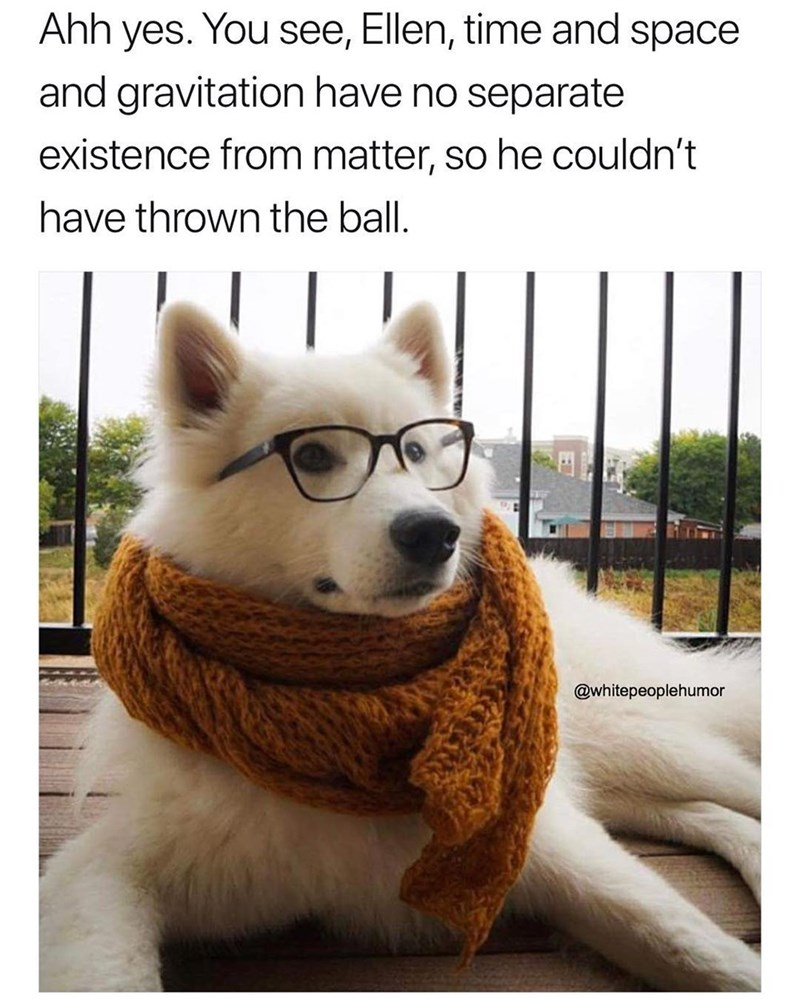 Funny meme about dog wearing glasses and a scarf, supposed to be an intellectual.