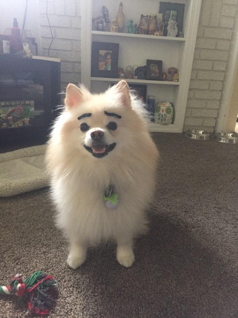 Dog - 00