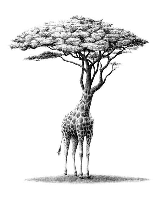 Redmer Hoekstra - Giraffe