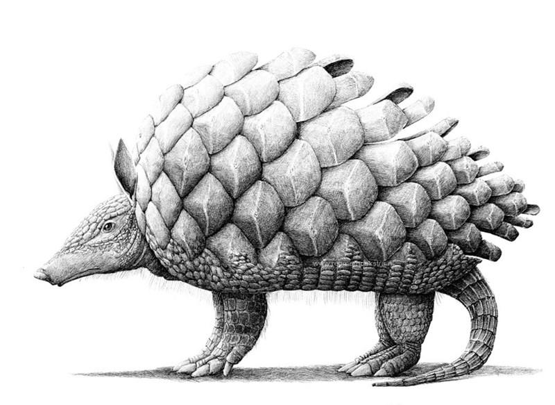 Redmer Hoekstra - Tortoise - www.reaacekstra.n