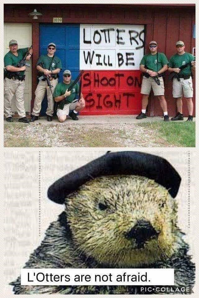 Funny meme about people spelling looters as lotters, otter in beret.