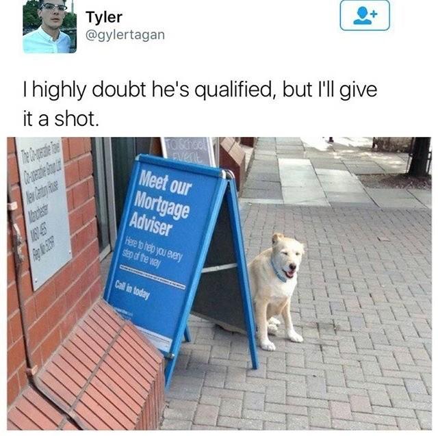 Dog next to Mortgage Adviser sign funny tweet meme