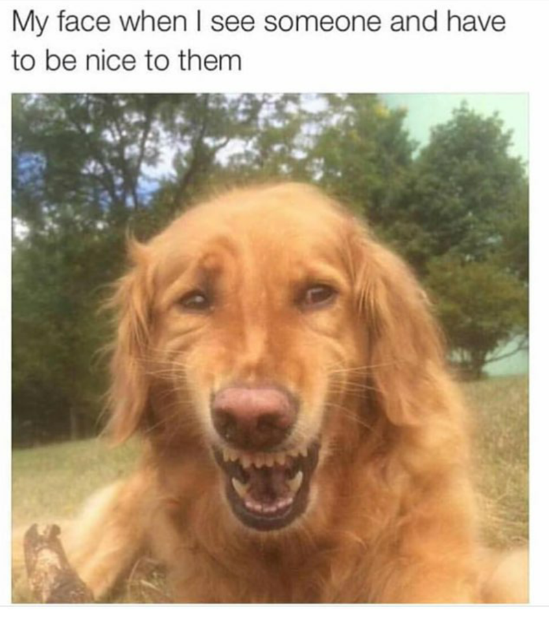 dog making a forced be nice to them face