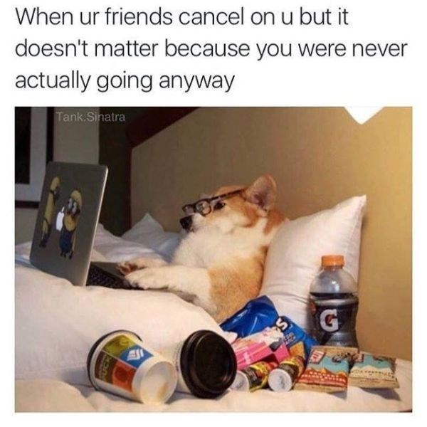 Dog in bed with junk food as meme about when friend cancels on you but its ok because you never planned on going anyway
