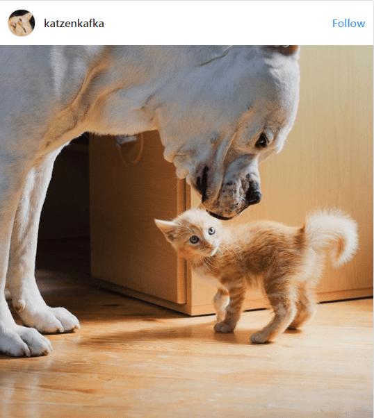 kittens - Cat - katzenkafka Follow