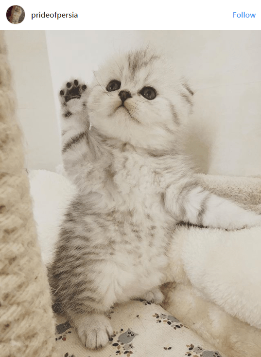 kittens - Cat - prideofpersia Follow