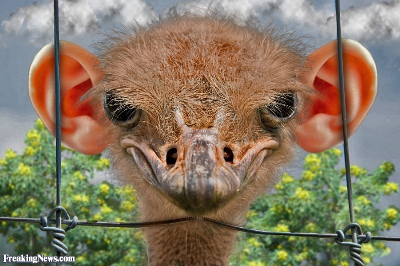 ear photoshop - Vertebrate - FreakingNews.com