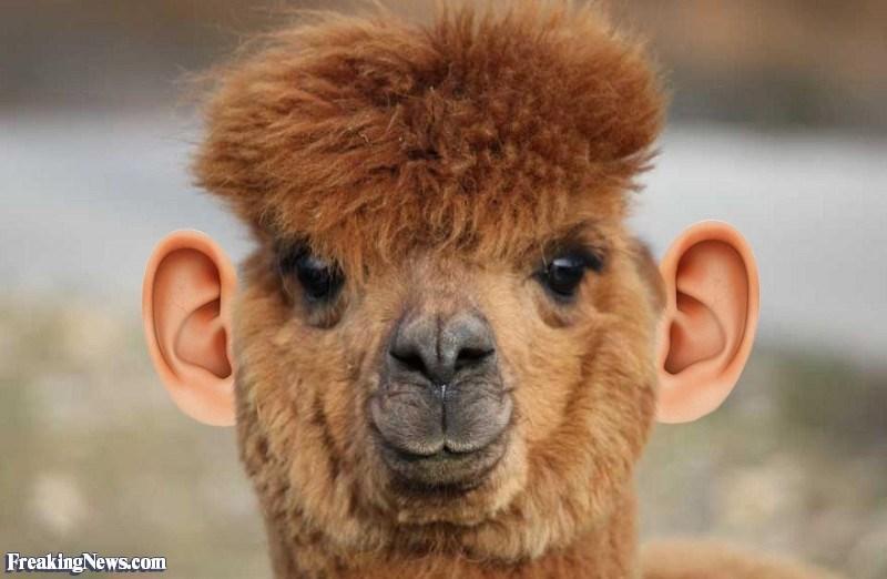 ear photoshop - Mammal - Freaking News.com