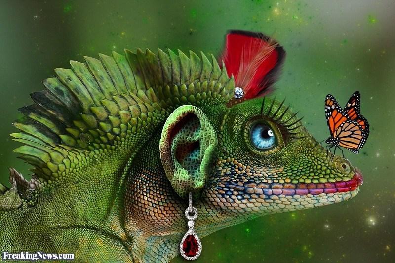 ear photoshop - Chameleon - Freaking News.com