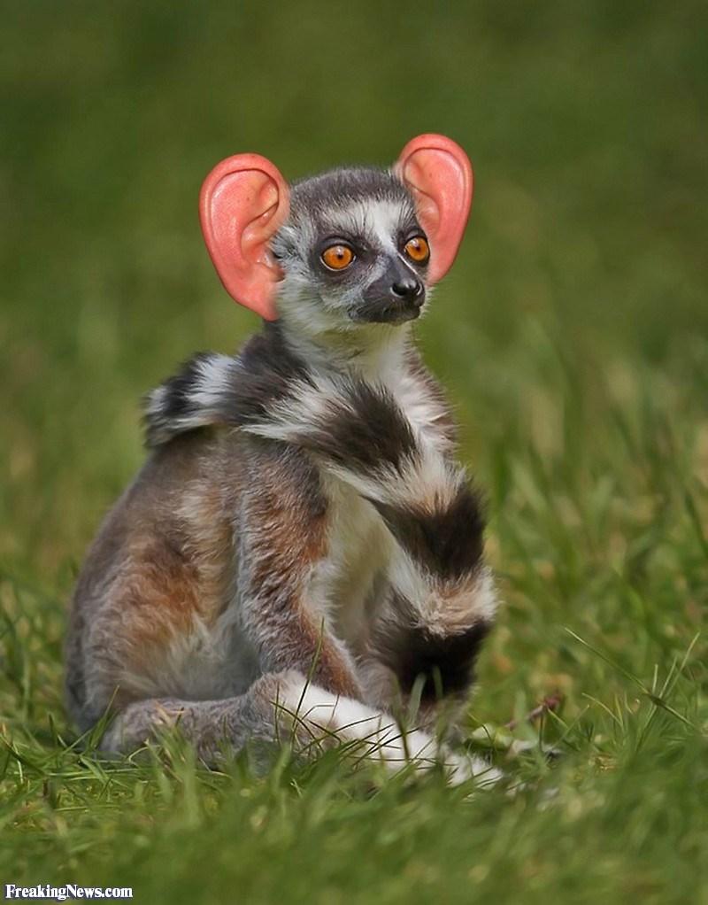 ear photoshop - Vertebrate - Freaking News.com