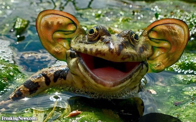 ear photoshop - Terrestrial animal - Freaking News.com