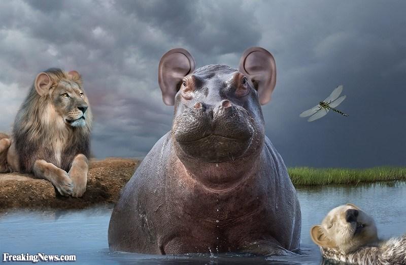 ear photoshop - Wildlife - Freaking News.com
