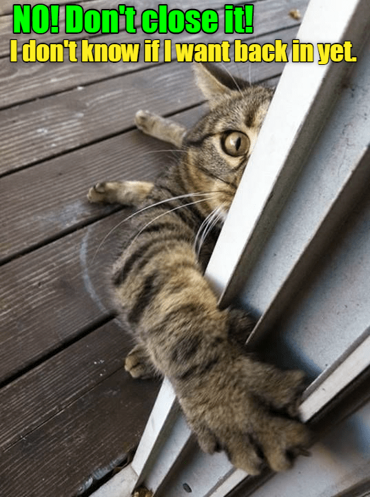 cat meme - Cat - NO!Don't close i Idon't know iflwant back in yet.
