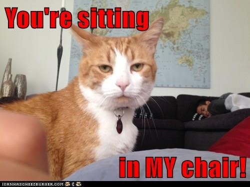 you're sitting in my chair! lolcats lol cat memes funny cats